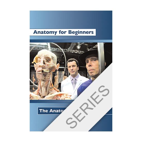 Anatomy for beginners