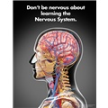 Don't Be Nervous About Learning the Nervous System