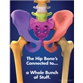 The Hip Bone's Connected to…